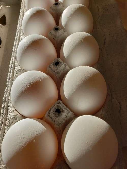 Eggs Dozen Food Carton Egg Raw Breakfast Protein