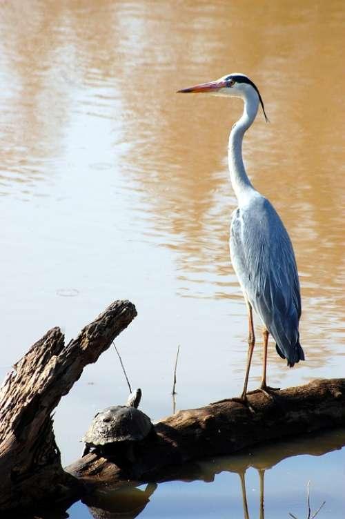 Egret Bird Water Nature