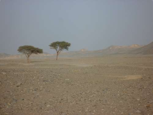 Egypt Desert Lonely Arid Drought Landscape Nature
