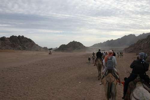 Egypt Adventure Camel Desert Africa