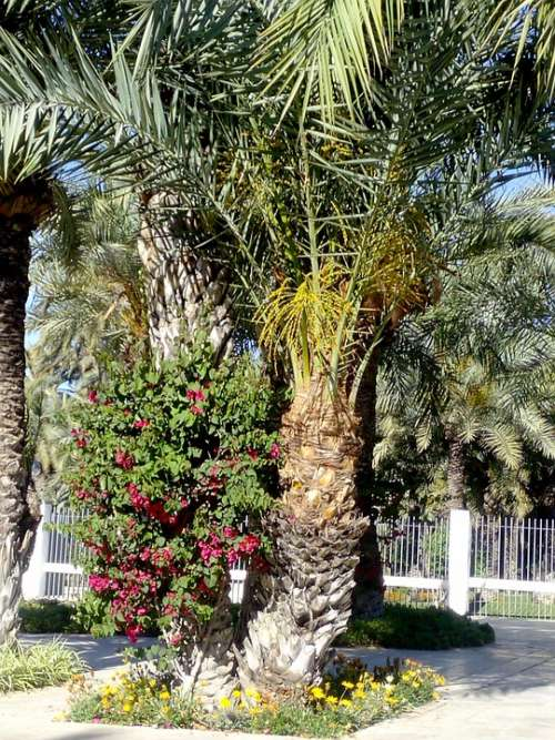 Elche Park Walk Tourism Palms Plants Nature