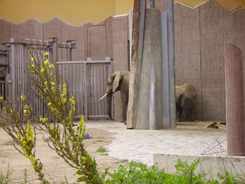 Elephant Zoo Animal Enclosures Hallucination