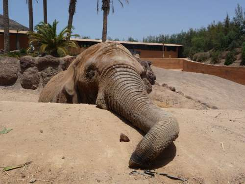 Elephant Proboscis National Park Pachyderm