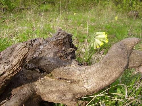Elephant Elephant Head Head Wood Stubs Trunks