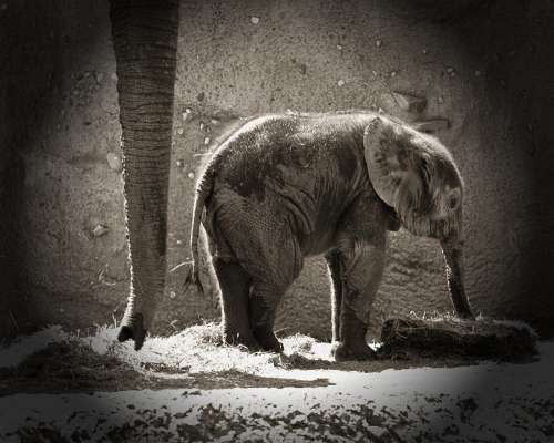 Elephants Newborn Animals Zoo Mother Daughter