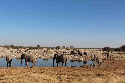 Elephants Namibia Wild Nature