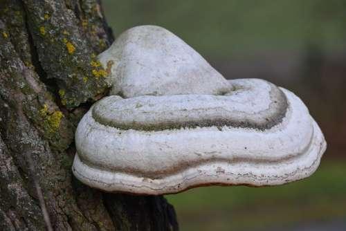Elves Bench Nature Dead Tree Mushroom
