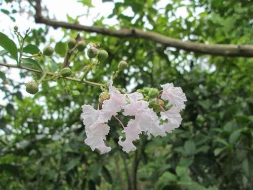 Embankment Angle Park Flower Garden Plant