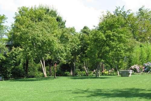 Enea Garden Landscape Tree Plant Rapperswil Trees