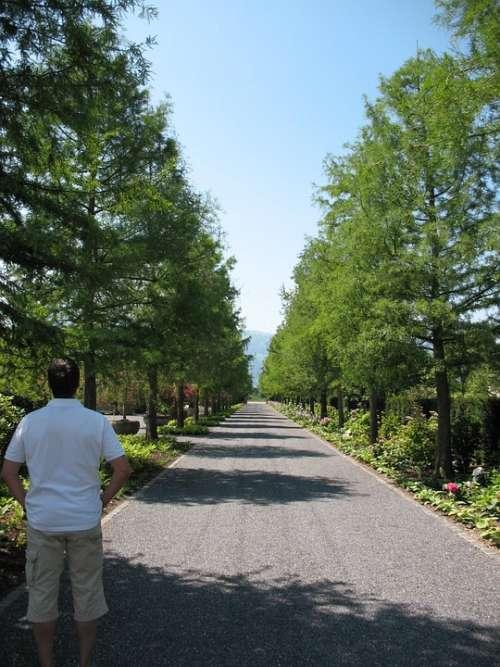 Enea Garden Tree Lined Avenue Plant Avenue