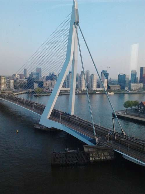 Erasmus Bridge Cable Stayed Bridge