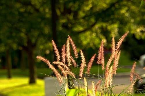 Evening Sunlight Soft Light Nature Silhouette Path