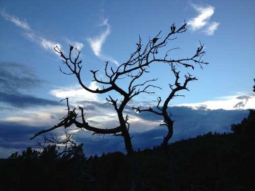Evening Himmel Tree Silhouette Sweden