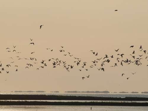 Evening Sky Birds Flock Of Birds Sun Sunset Sky