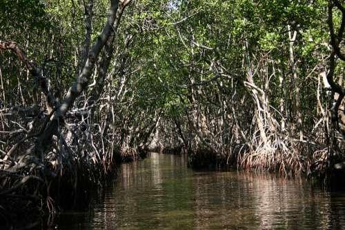 Everglades Florida Swamp Nature Water Marsh