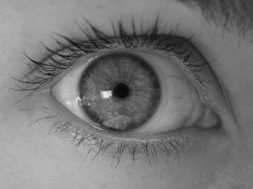 Eye Pupil Eyelash
