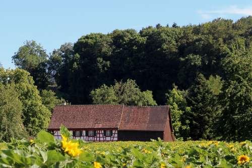 Fachwerkhaus Sunflower Field Nature Landscape