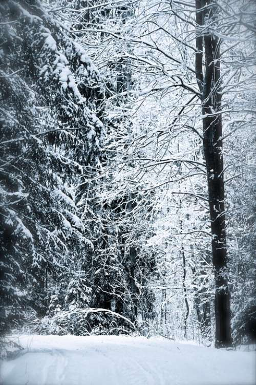 Fairytale Forest Snow Winter Trees Tree Cold