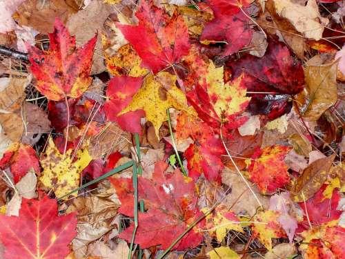 Fall Leaves Moist Autumn Season Orange Red Leaf