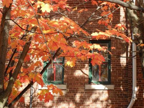 Fall Autumn New England Brick Red Orange Leaves