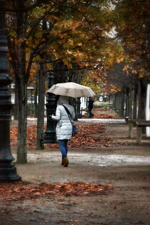 Fall Park Trees Leaves Umbrella Rain Wind Nature