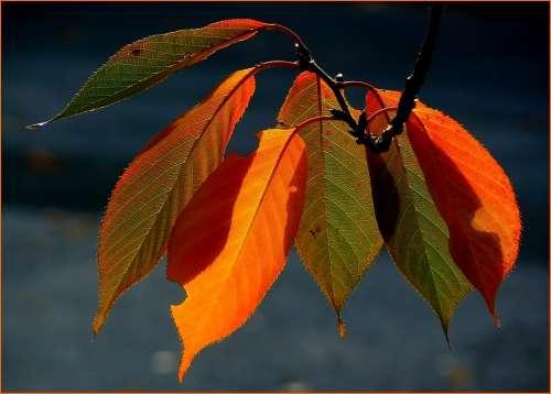 Fall Foliage Colorful Leaves Autumn Colours Autumn