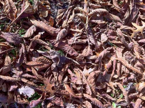 Fall Foliage Forest Floor Golden Brown Leaves Dry