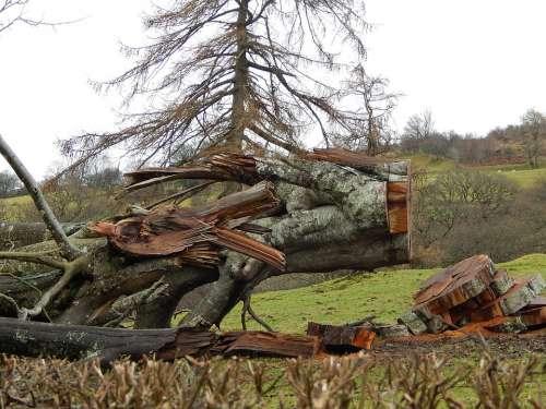 Fallen Tree Hurricane Damage Bird In Tree Secret
