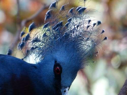 Fan-Deaf Bird Spring Jewelry Plumage Blue