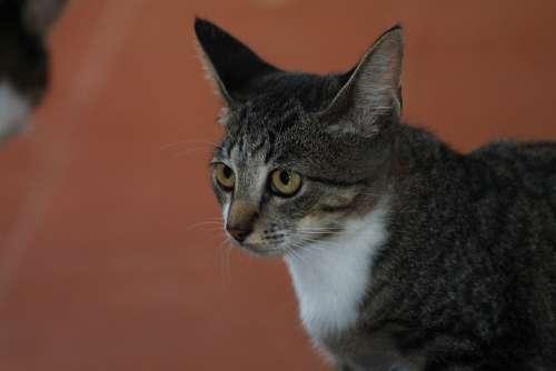 Feline Feline Look Tuned Animal Pet Cat'S Eyes