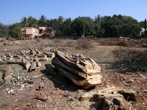 Felled Tree Trunk Log Woodpile Dharwad India