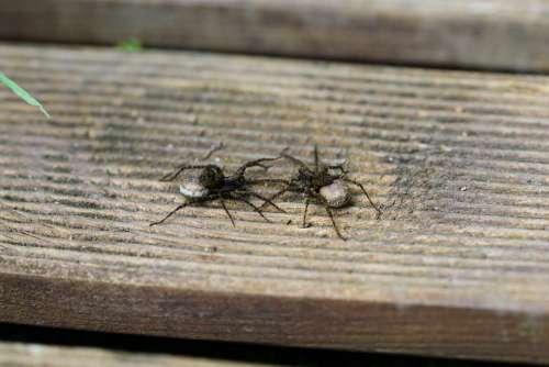 Female Garden Wolf Spider Wolf Spiders Female Spider