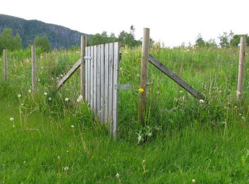 Fence Wood Post Wire Demarcation Meadow Grass
