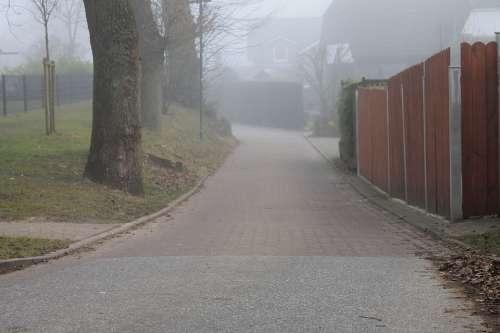 Fence Road Tree Fog Atmosphere Morning