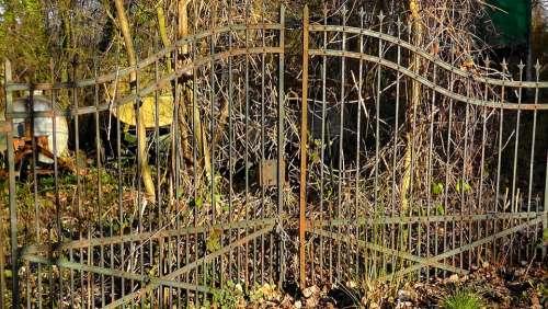 Feral Garden Garden Wild Door Old Dilapidated