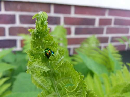Fern Green Plant Beetle Nature Insect Animal