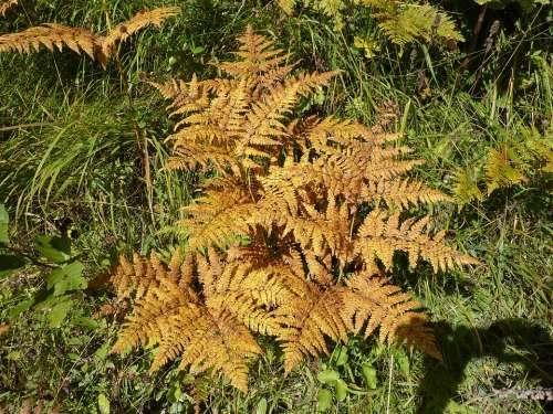 Fern Leaf Fern Green Plant Forest Plant Autumn