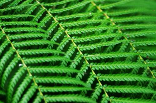 Fern Abstract Green Lines Composition Background