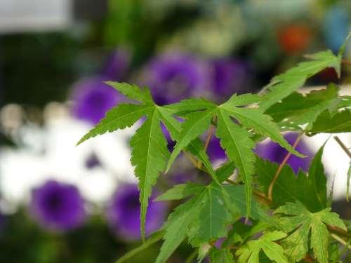 Fern Plant Green Nature Flora