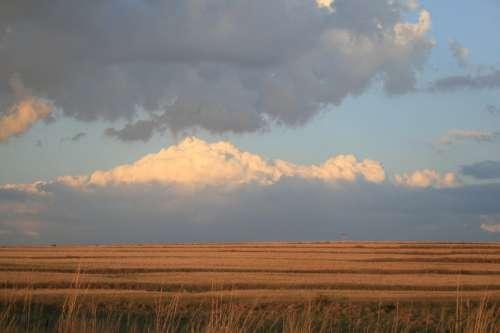 Field Flat Outstreched Deep Ochre Grass Glow Sky