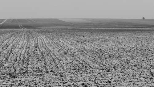 Field Nature Landscape Winter Black And White Cold