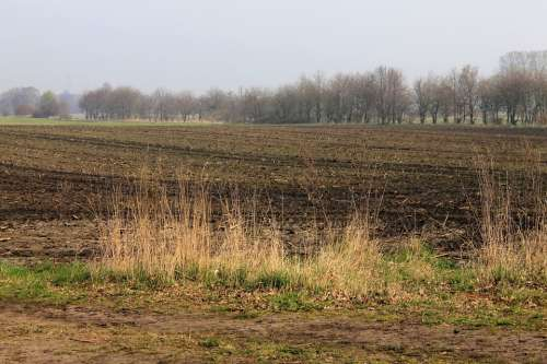 Field Landscape Nature Agriculture