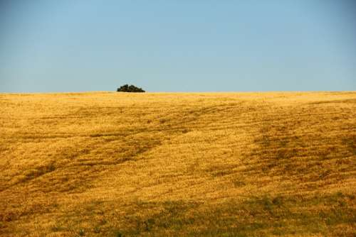 Field Agriculture Italy Nature Crop Summer