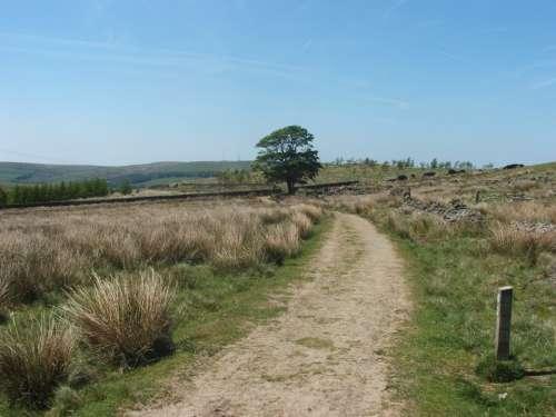 Field Landscape Tree Path Sky Scenery Grass