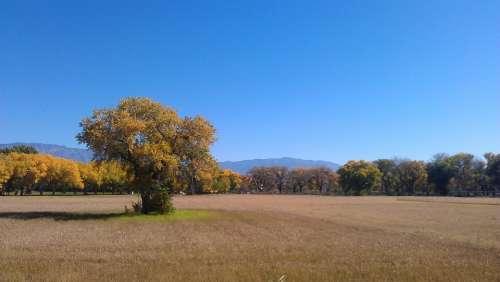 Field In Fall Albuquerque Open Space Nature Autumn