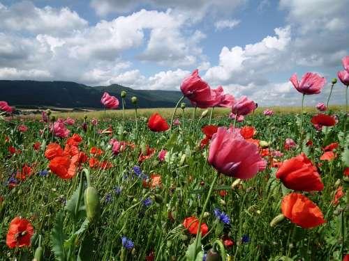 Field Of Poppies Poppy Klatschmohn Clouds Sky