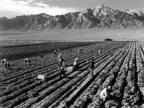 Fieldwork Harvest Mount Williamson Ansel Adams