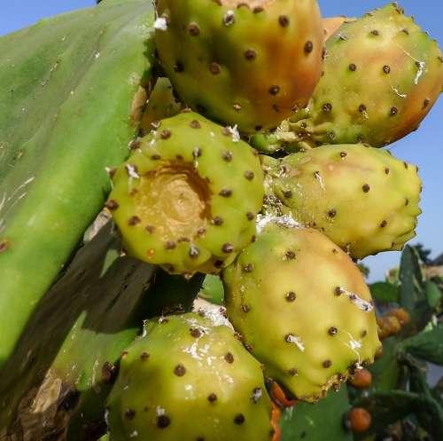 Fig Chumbo Fruit Market Food