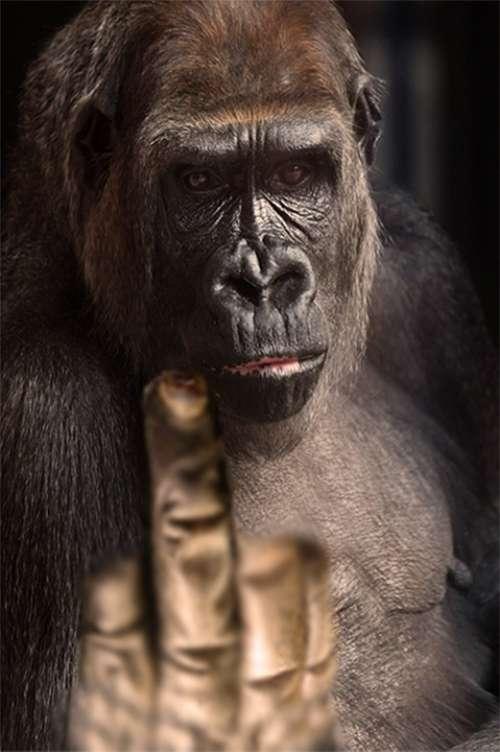Finger Gesture Gorilla Gesture Finger
