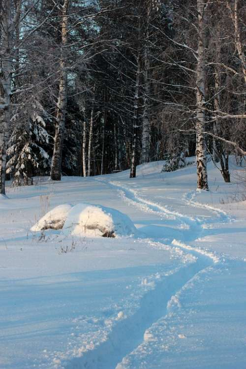 Finland Landscape Forest Trees Woods Winter Snow